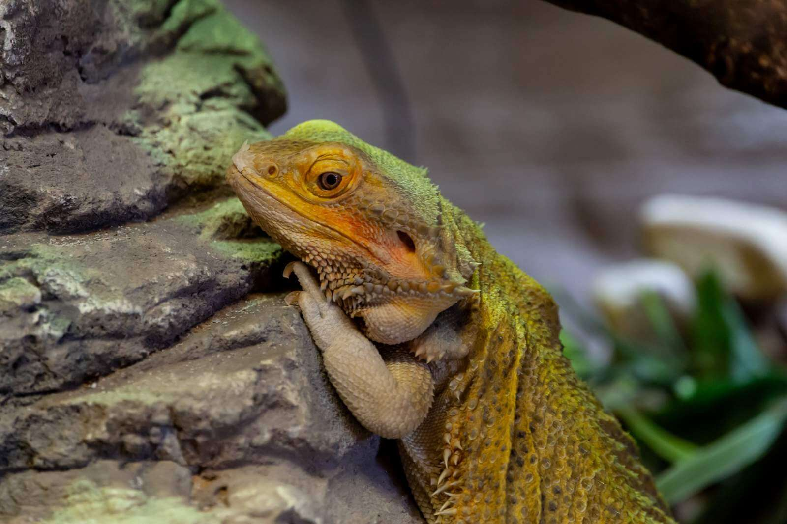 The Top 11 Bearded Dragon Accessories That You Need